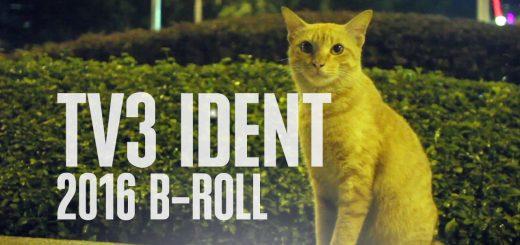 Kucing TV3